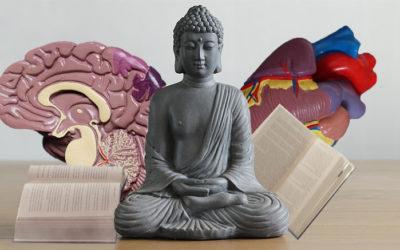 Wirkung von Meditation   Was sagt die Wissenschaft – Teil II