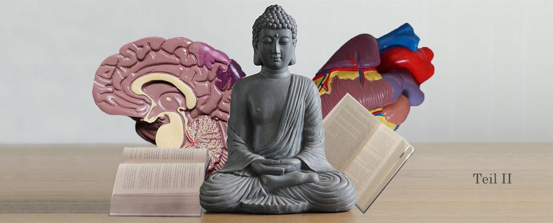Wirkung von Meditation | Was sagt die Wissenschaft – Teil II